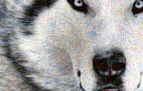 fotomosaik-hund