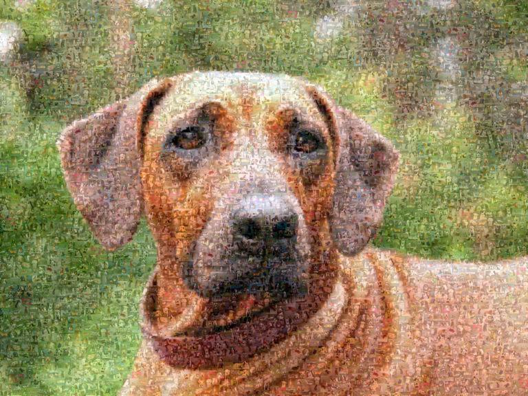 Fotomosaik Hund